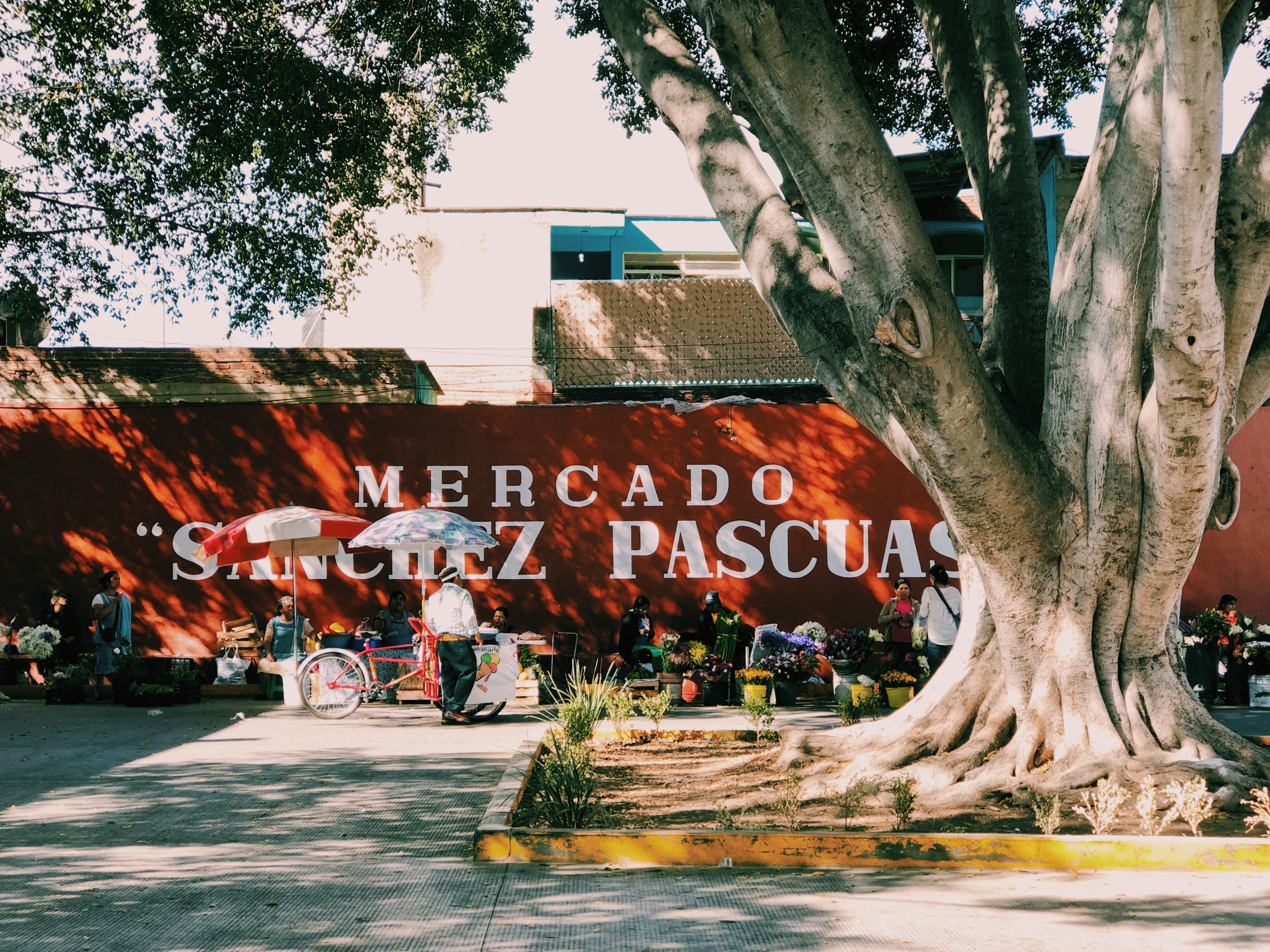 Mercado Sanchez Pascuas Oaxaca